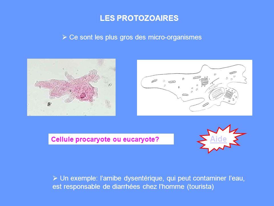 LES PROTOZOAIRES Aide Ce sont les plus gros des micro-organismes