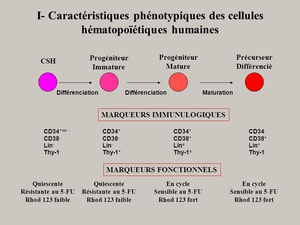 I- Caractéristiques phénotypiques des cellules hématopoïétiques humaines
