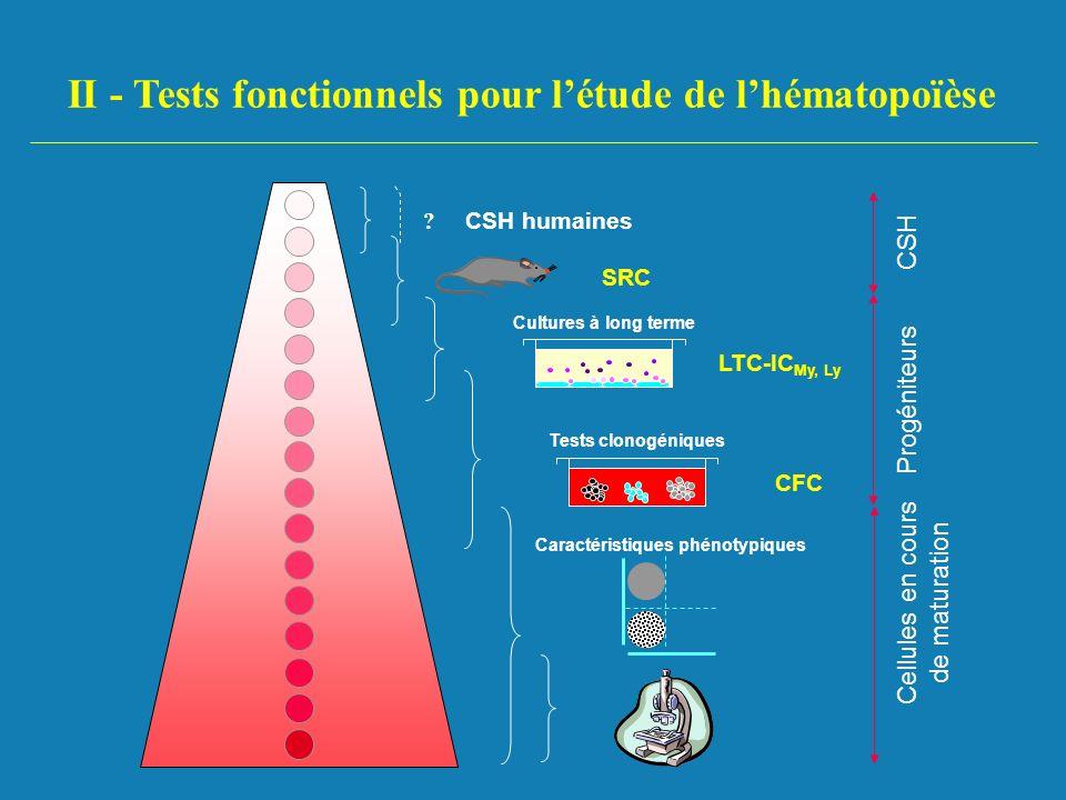 II - Tests fonctionnels pour l'étude de l'hématopoïèse