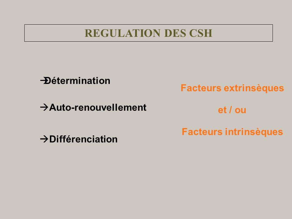 REGULATION DES CSH Détermination Facteurs extrinsèques