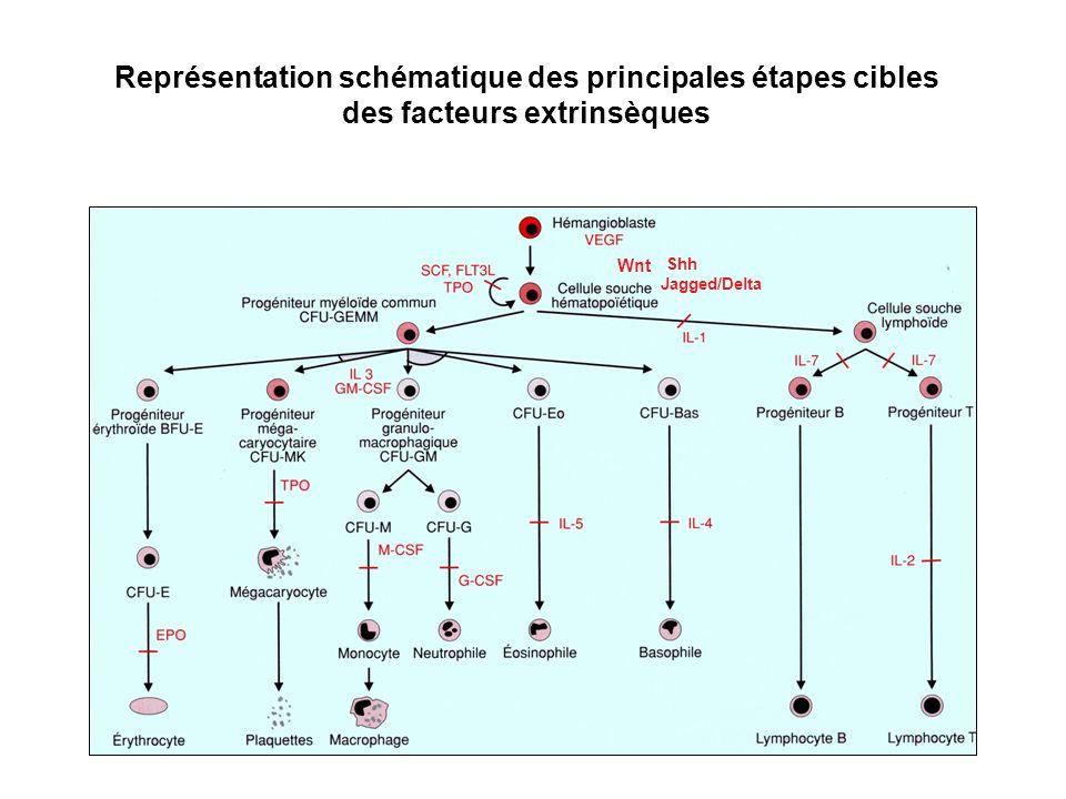 Représentation schématique des principales étapes cibles