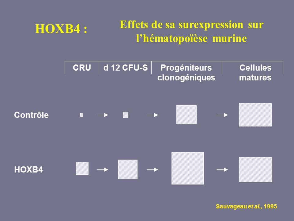 Effets de sa surexpression sur l'hématopoïèse murine