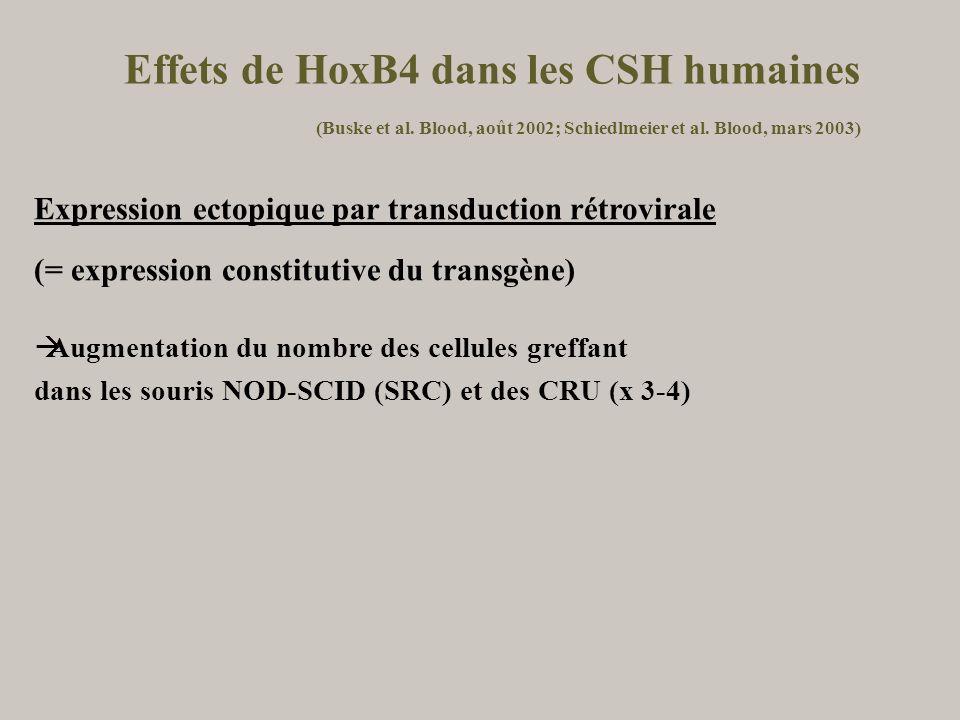 Effets de HoxB4 dans les CSH humaines. (Buske et al