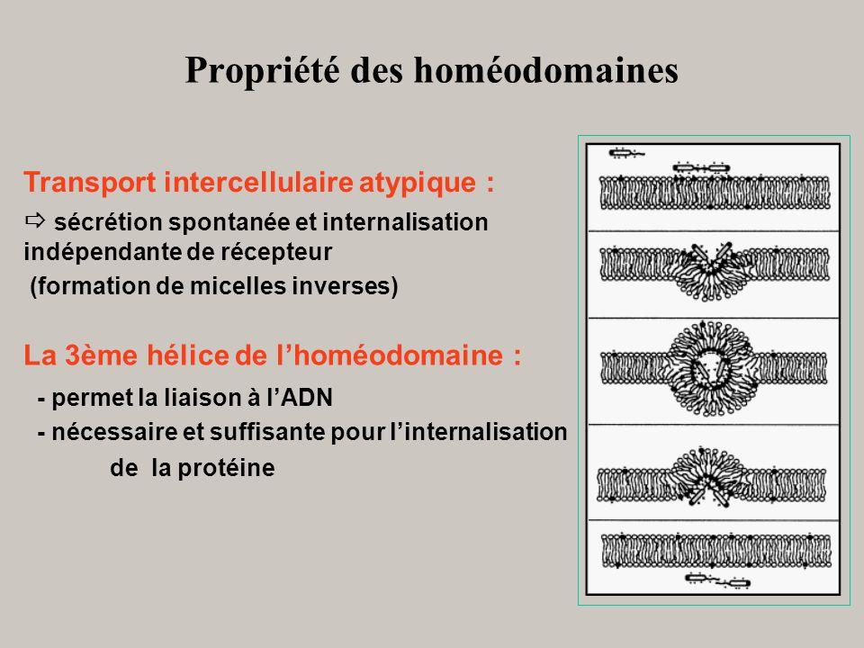 Propriété des homéodomaines
