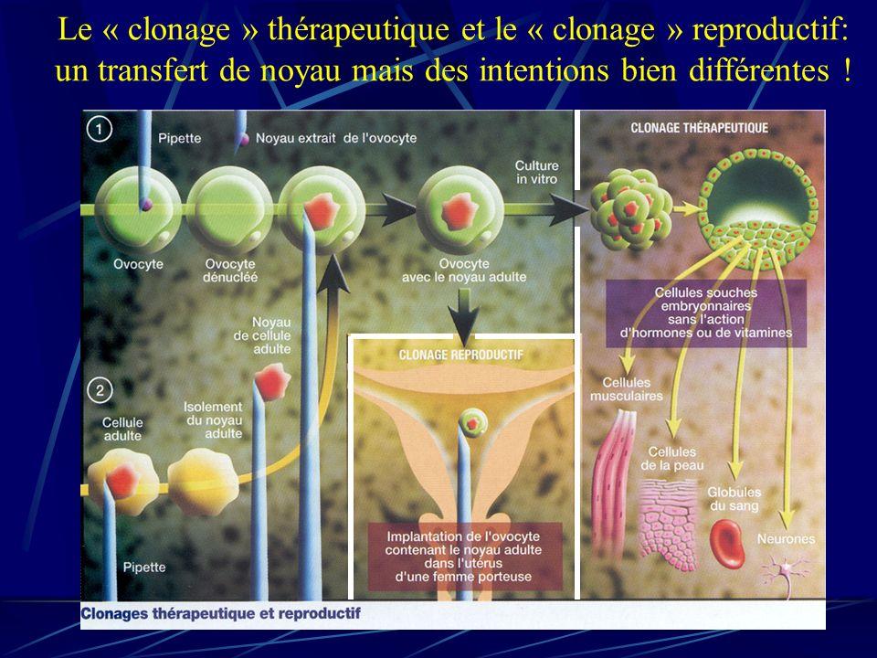 Le « clonage » thérapeutique et le « clonage » reproductif: