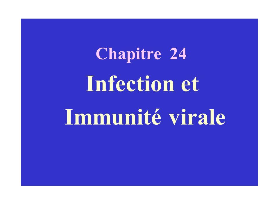 Chapitre 24 Infection et Immunité virale