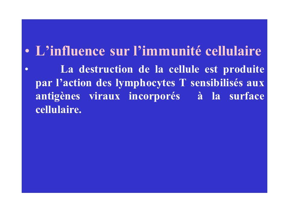 L'influence sur l'immunité cellulaire