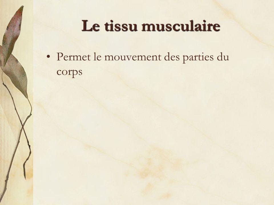 Le tissu musculaire Permet le mouvement des parties du corps