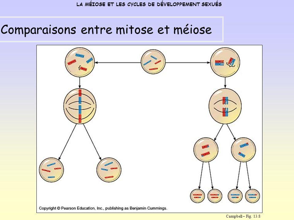 Comparaisons entre mitose et méiose