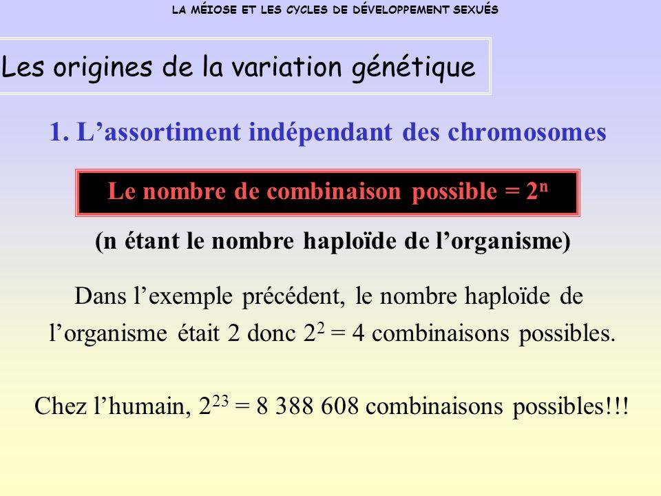 1. L'assortiment indépendant des chromosomes
