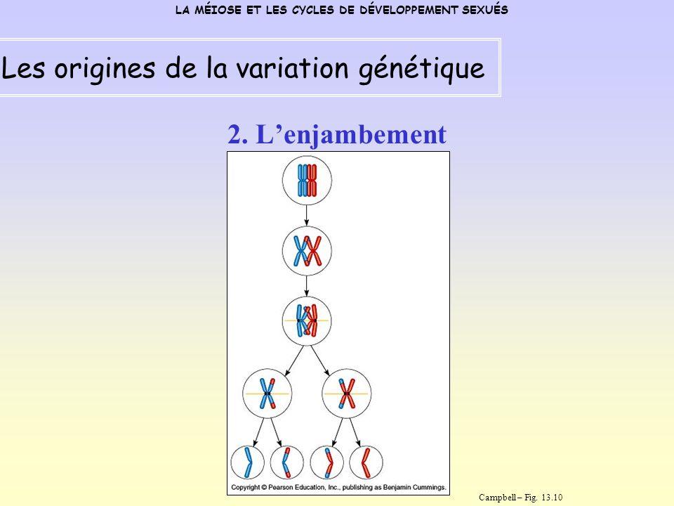 Les origines de la variation génétique