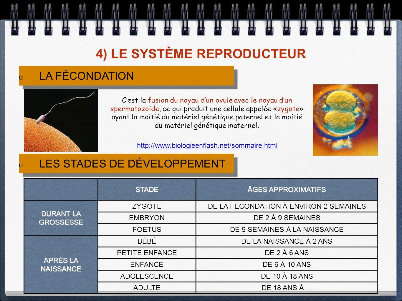 4) LE SYSTÈME REPRODUCTEUR