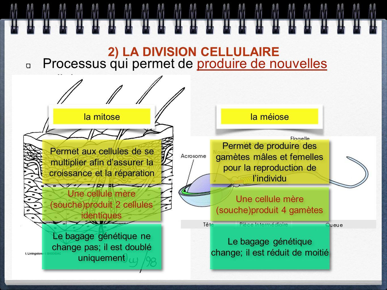 2) LA DIVISION CELLULAIRE