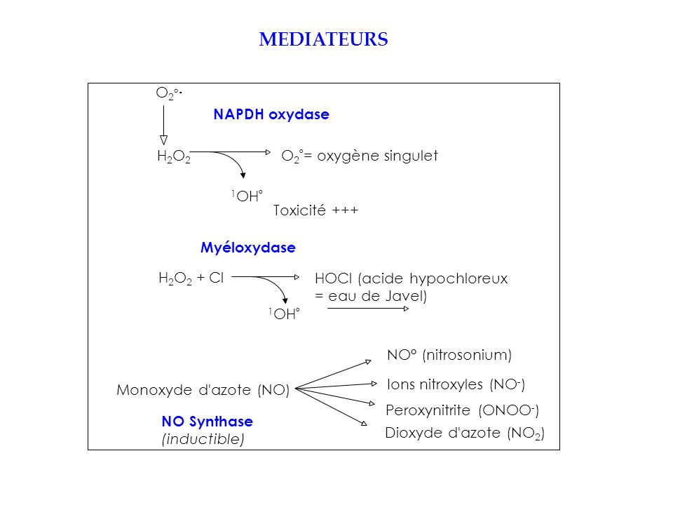 MEDIATEURS O2° NAPDH oxydase H2O2 O2°= oxygène singulet 1OH°