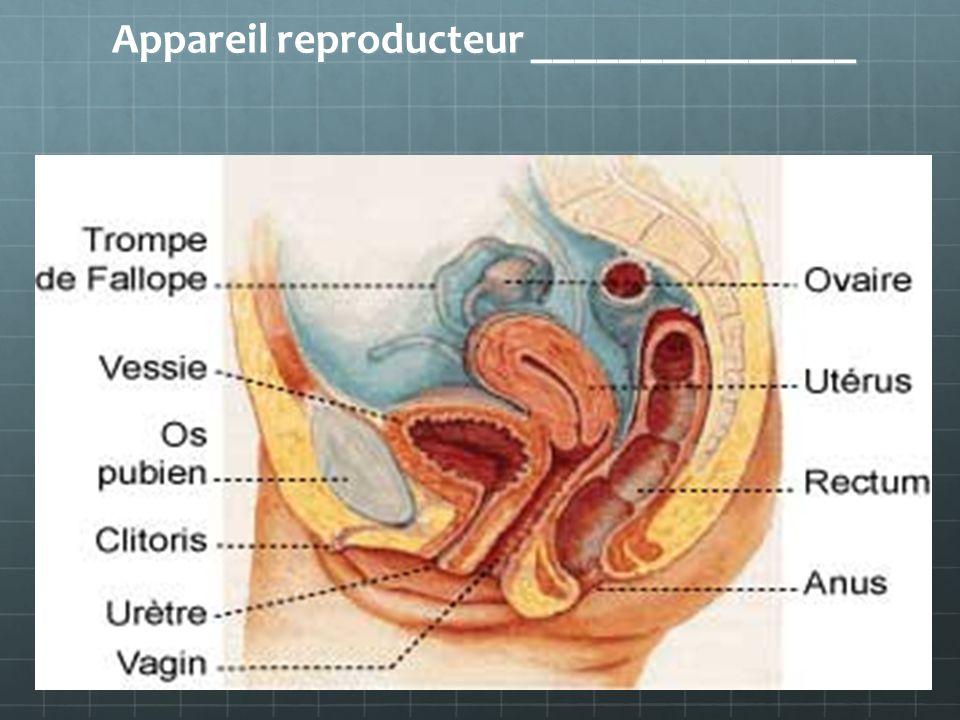 Appareil reproducteur _______________