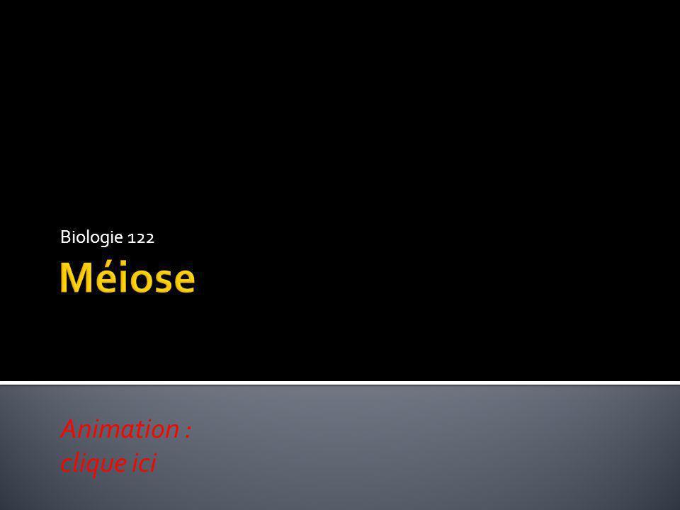 Biologie 122 Méiose Animation : clique ici
