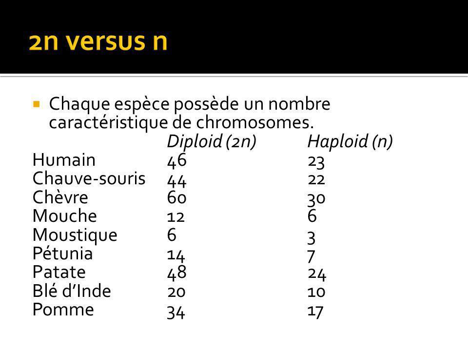 2n versus n Chaque espèce possède un nombre caractéristique de chromosomes. Diploid (2n) Haploid (n)