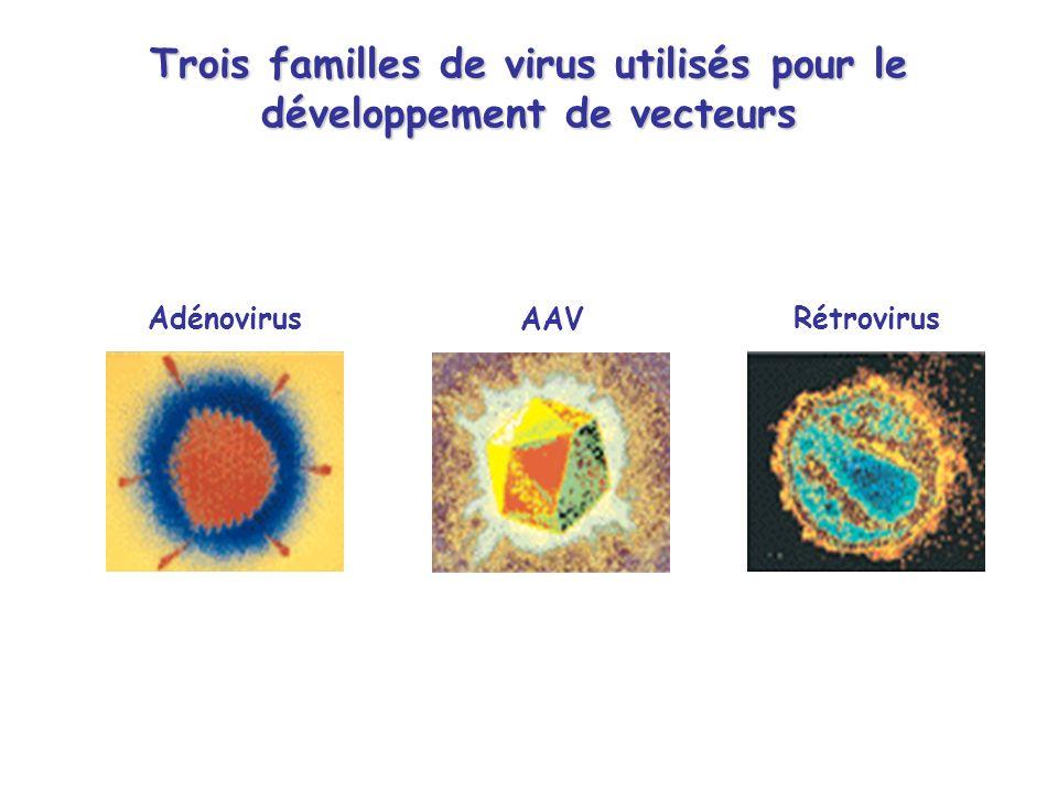 Trois familles de virus utilisés pour le développement de vecteurs