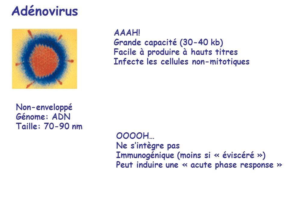 Adénovirus AAAH! Grande capacité (30-40 kb)