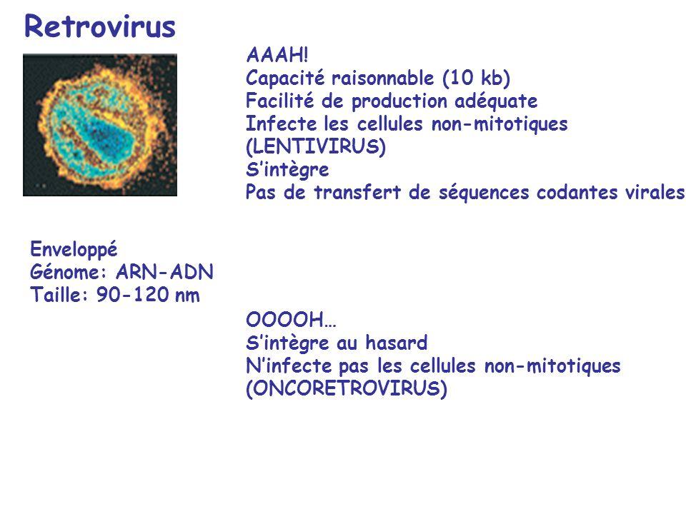 Retrovirus AAAH! Capacité raisonnable (10 kb)
