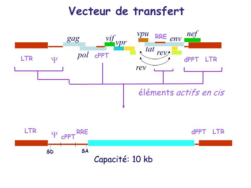 Vecteur de transfert vpu nef gag vif env vpr tat rev pol Y rev