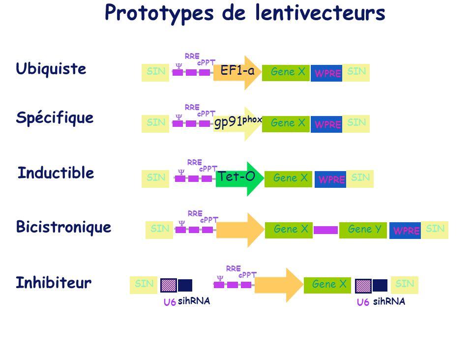 Prototypes de lentivecteurs
