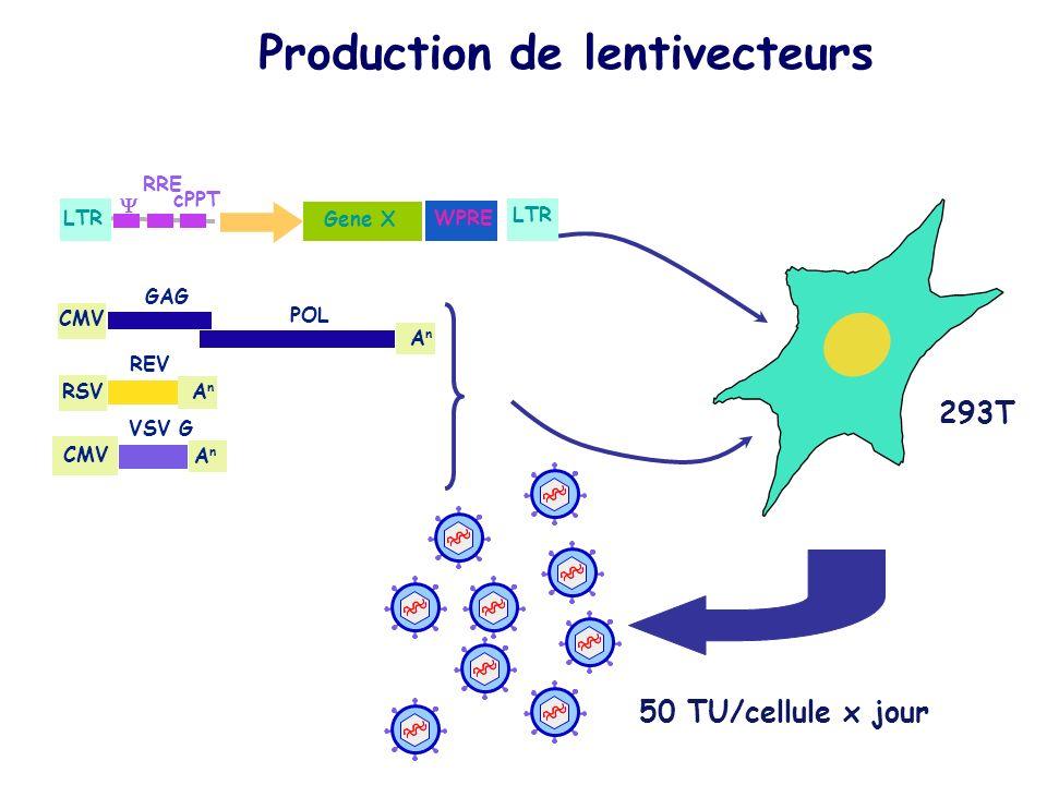 Production de lentivecteurs
