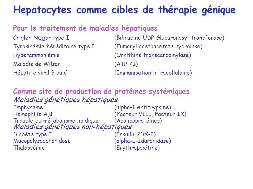 Hepatocytes comme cibles de thérapie génique