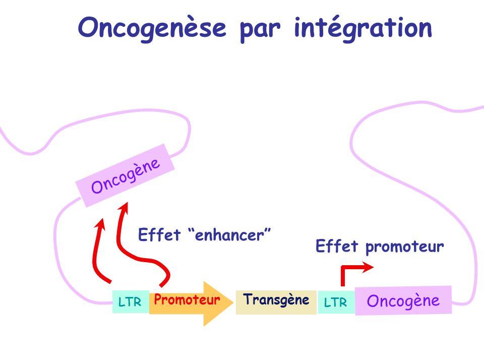 Oncogenèse par intégration