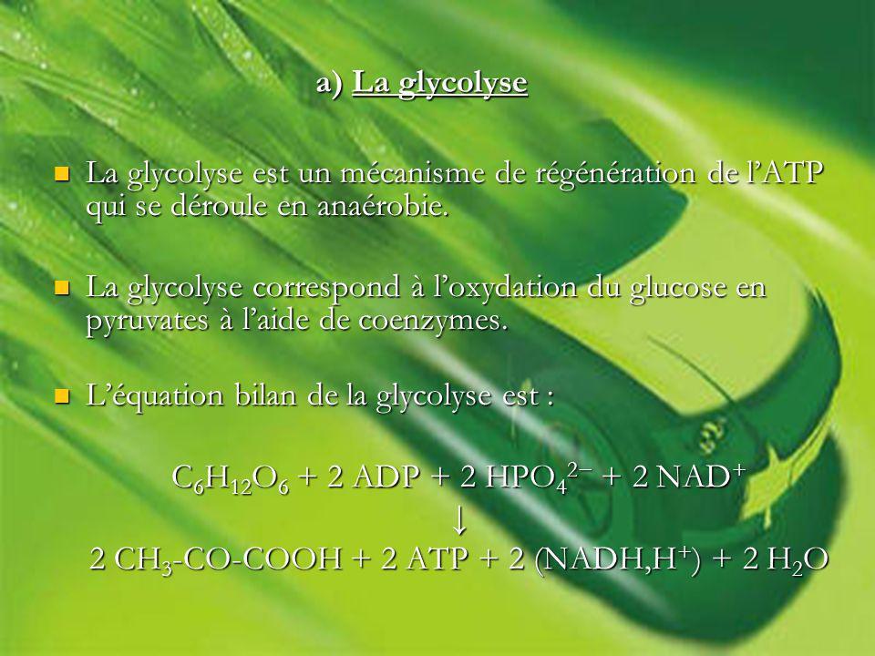 2 CH3-CO-COOH + 2 ATP + 2 (NADH,H+) + 2 H2O