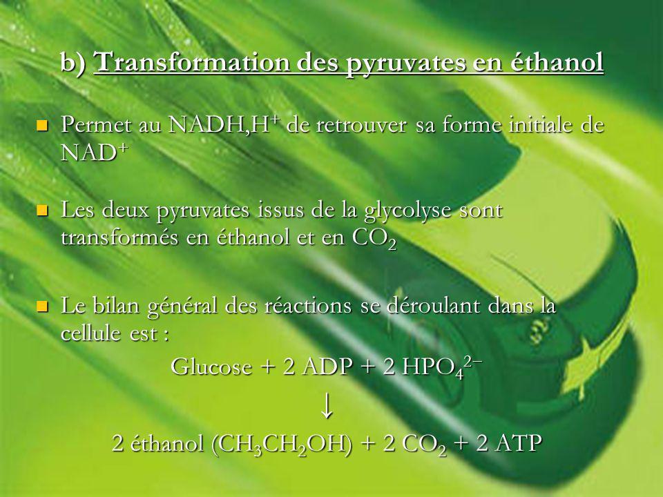 b) Transformation des pyruvates en éthanol