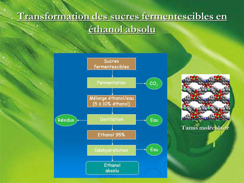 Transformation des sucres fermentescibles en éthanol absolu