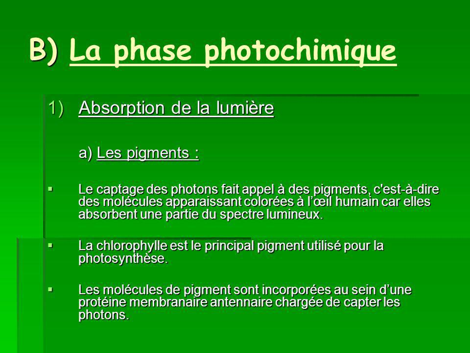 B) La phase photochimique