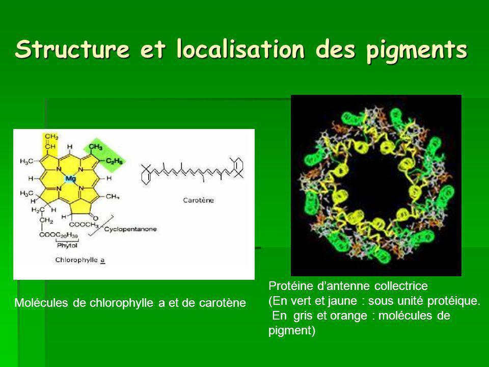 Structure et localisation des pigments