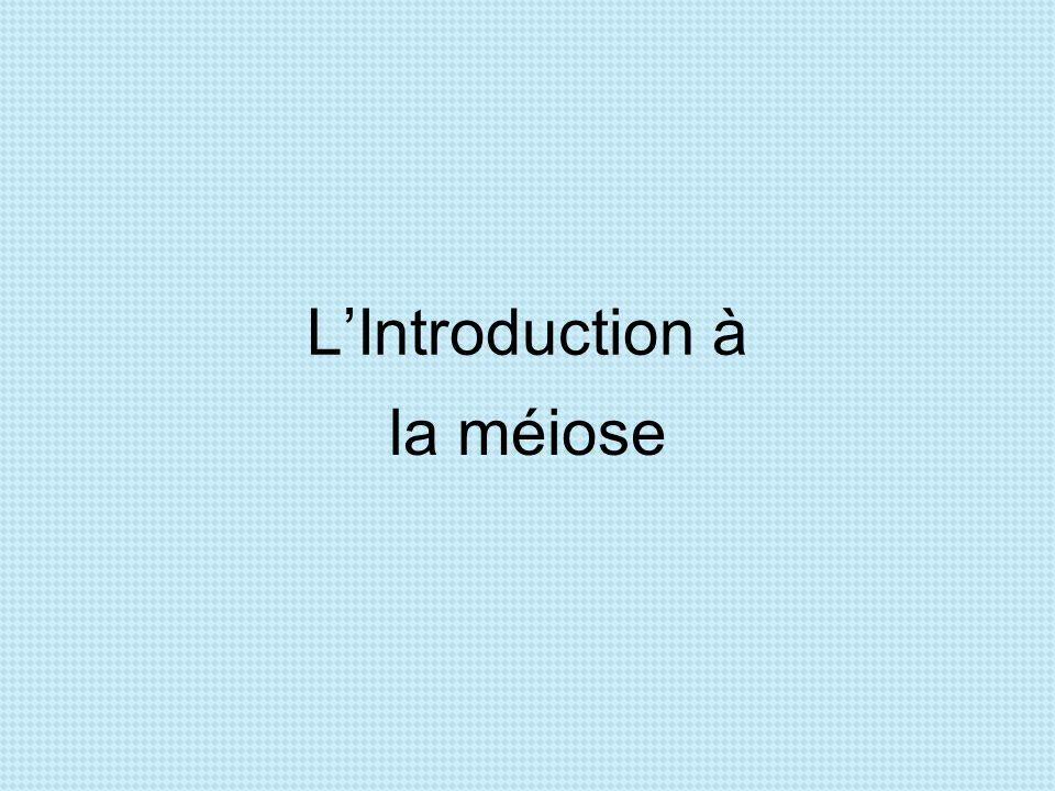L'Introduction à la méiose