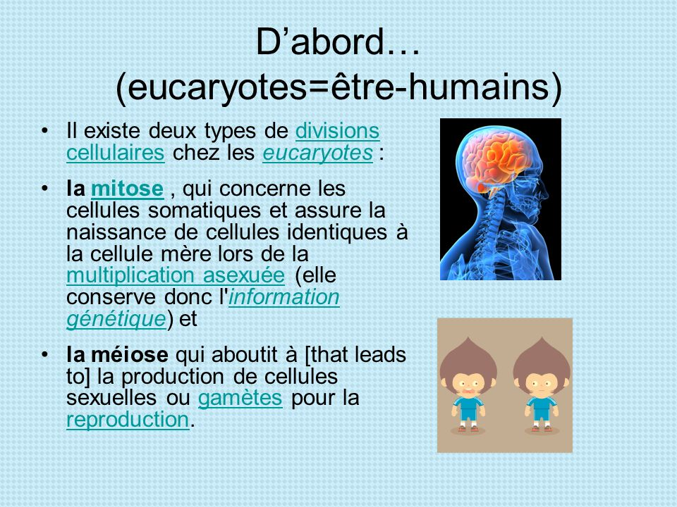 D'abord… (eucaryotes=être-humains)
