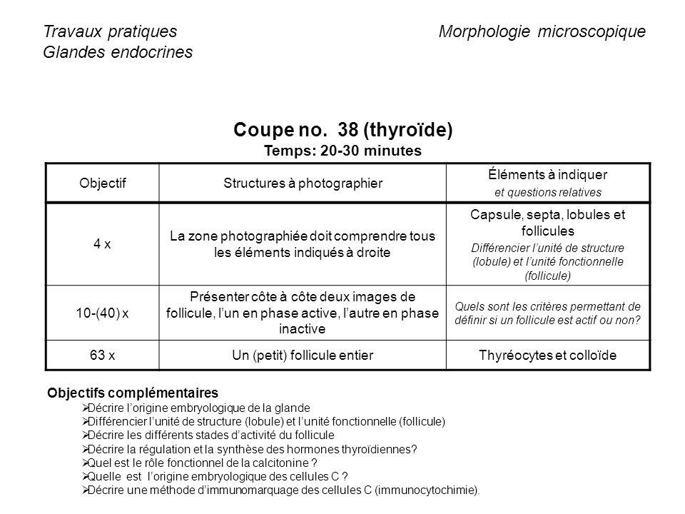 Coupe no. 38 (thyroïde) Travaux pratiques Glandes endocrines