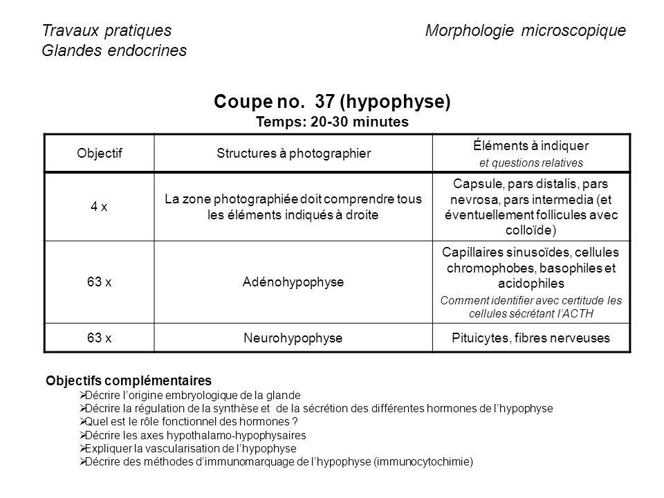 Coupe no. 37 (hypophyse) Travaux pratiques Glandes endocrines