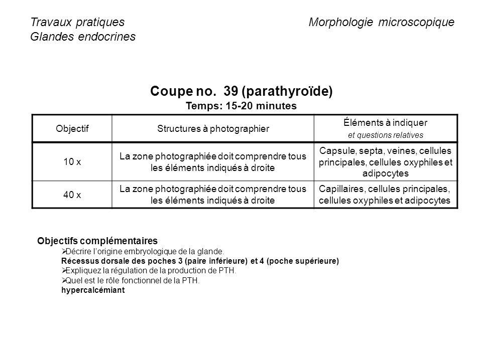Coupe no. 39 (parathyroïde)