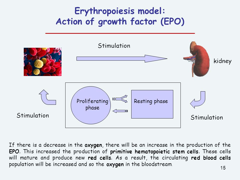 Erythropoiesis model: Action of growth factor (EPO)