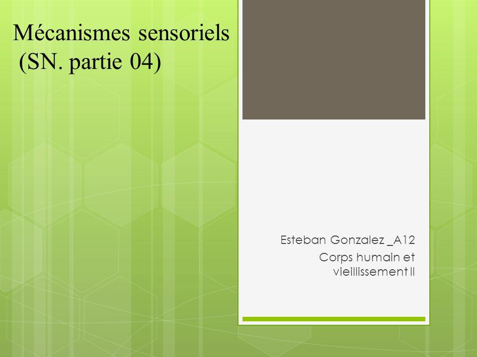 Mécanismes sensoriels (SN. partie 04)