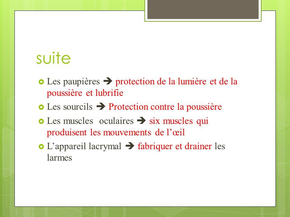 suite Les paupières  protection de la lumière et de la poussière et lubrifie. Les sourcils  Protection contre la poussière.