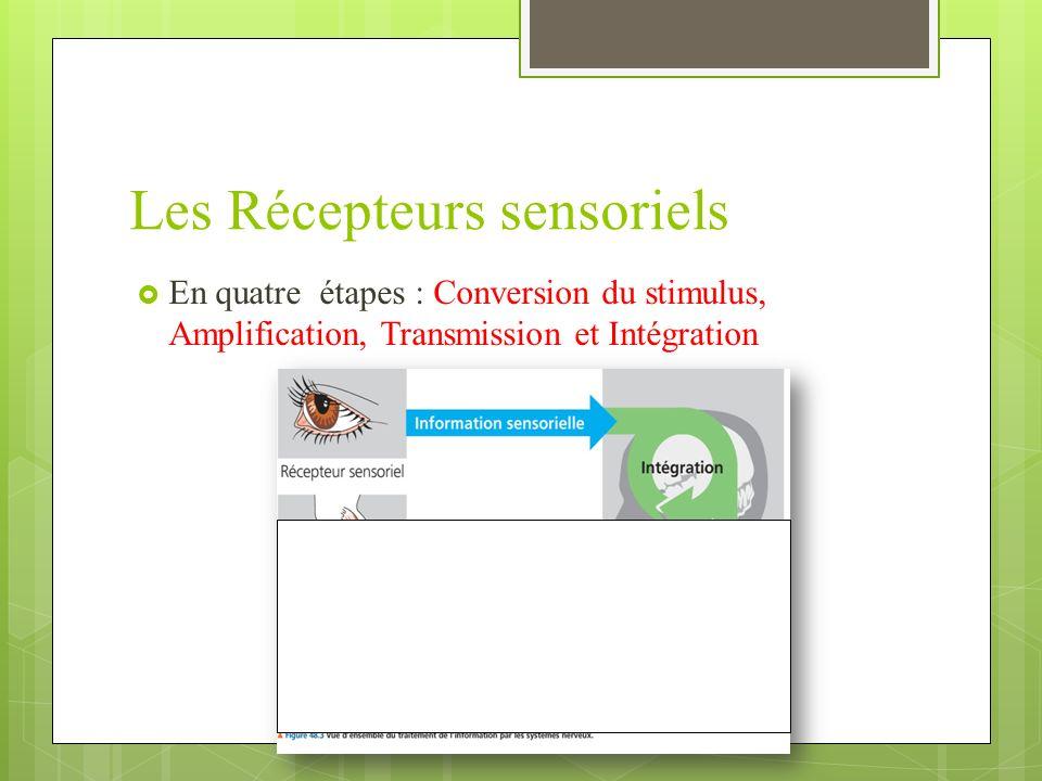 Les Récepteurs sensoriels