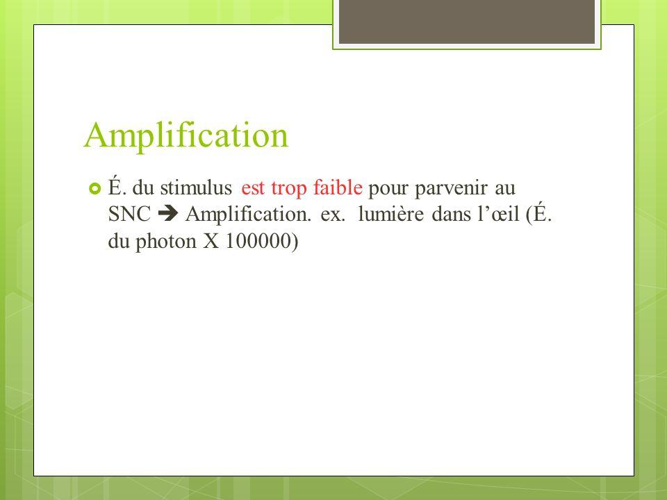 Amplification É. du stimulus est trop faible pour parvenir au SNC  Amplification.