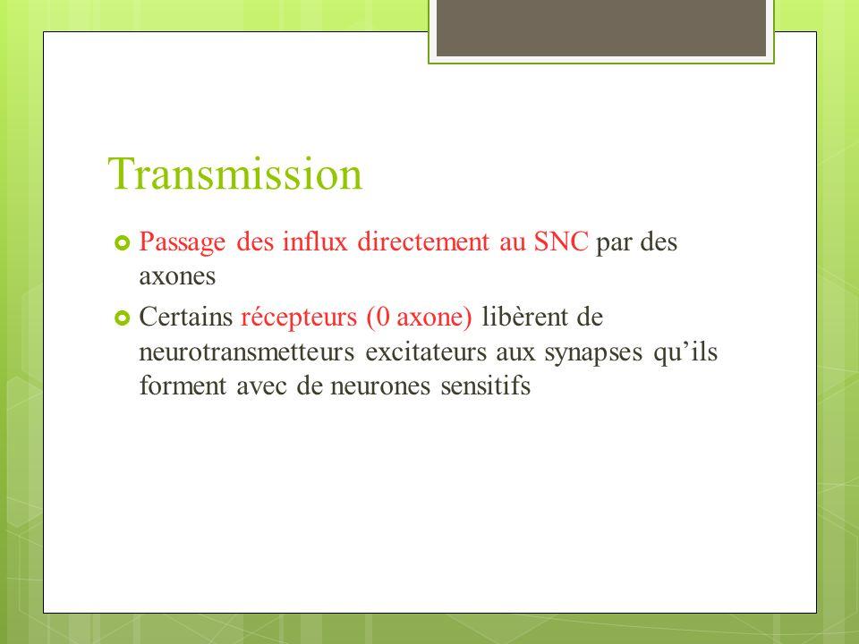 Transmission Passage des influx directement au SNC par des axones