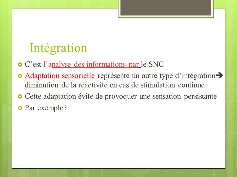 Intégration C'est l'analyse des informations par le SNC