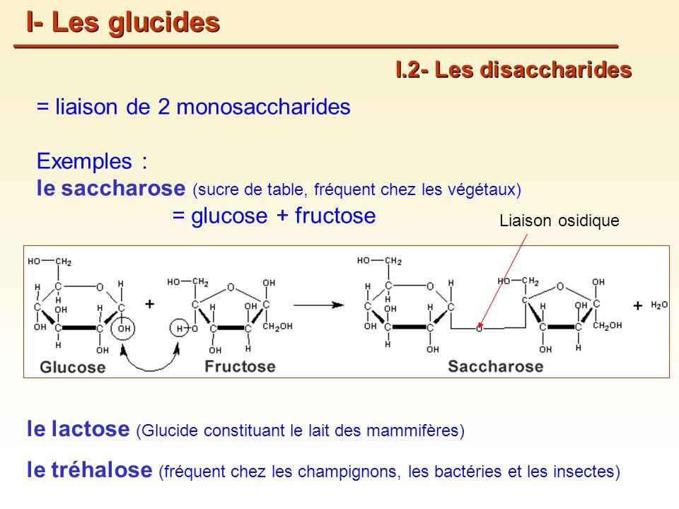 I- Les glucides I.2- Les disaccharides = liaison de 2 monosaccharides