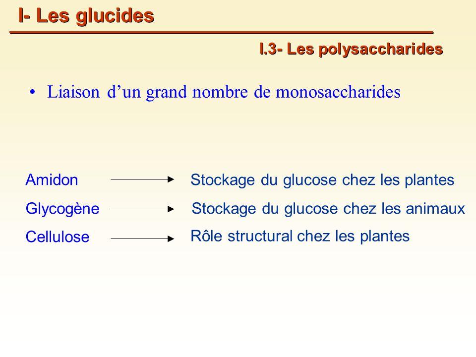 I- Les glucides Liaison d'un grand nombre de monosaccharides
