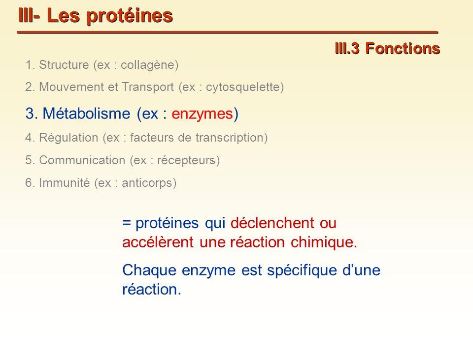 III- Les protéines III.3 Fonctions 3. Métabolisme (ex : enzymes)
