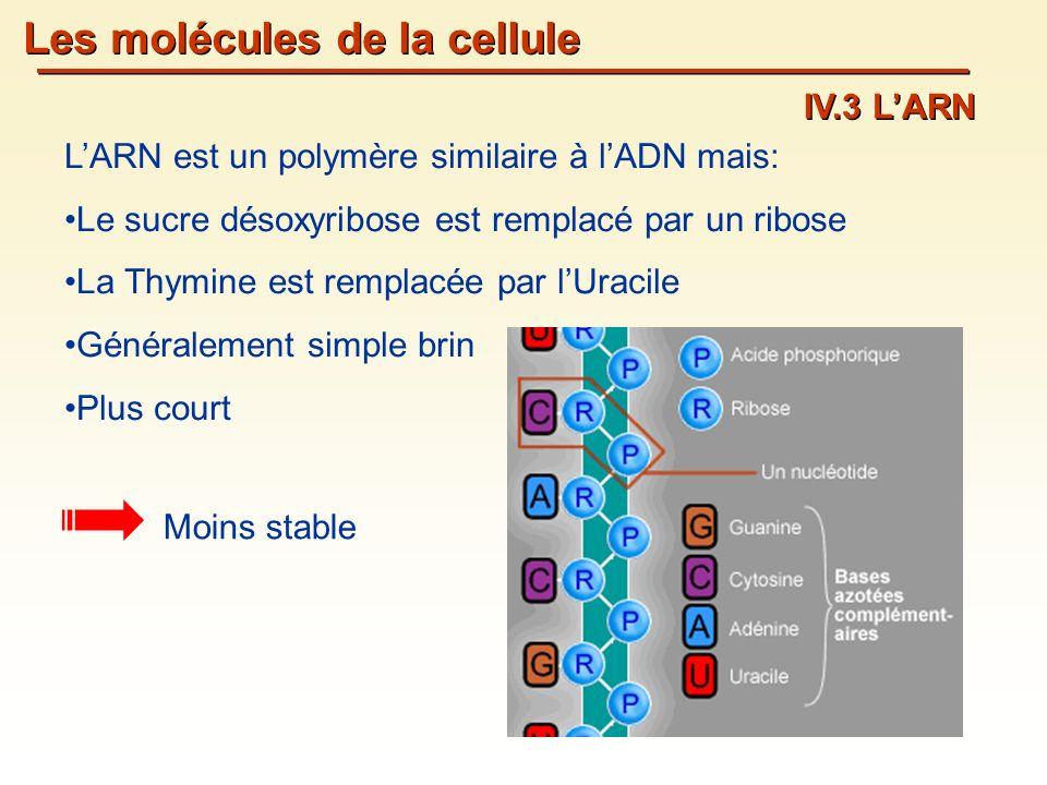 Les molécules de la cellule